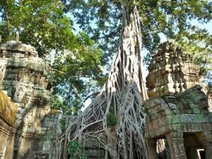 Ta Phrom - Ficus