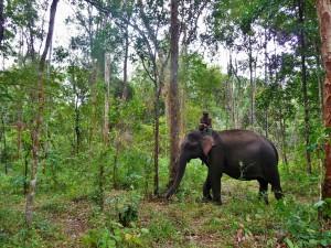 Elephant Community Project