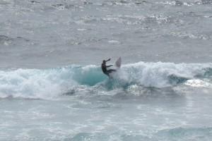 Uluwatu - Surfer pro