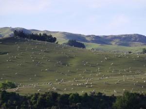 Sur la route de Christchurch